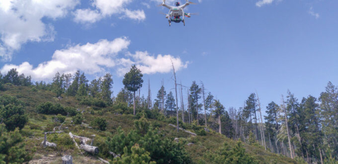 drone forestal