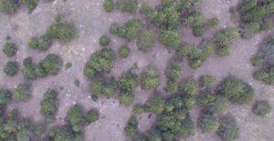 fotogrametria drone forestal